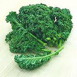 Kale (borecole)